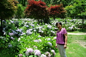 南投縣---竹山鎮:杉林溪藥花園繡球花季10