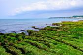 新北市---石門區:老梅綠藻礁20