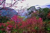 三峽賞櫻超級秘境B區:2015霧裡看花花還是花39