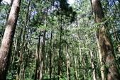 南投縣---鹿谷鄉:溪頭探索森林3
