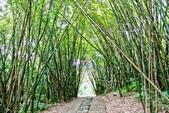 台北市---士林區:內雙溪樹木標本園7