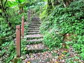 每年必會山岳之天上山:20140413賞桐步道天上山24