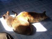 未分類相簿:陽光下的貓
