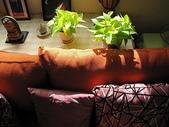 未分類相簿:新沙發來的那幾天、午後陽光、從窗外進來...溫暖啊