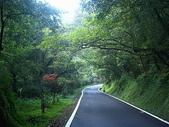 2007明池之旅:走在這明池的道路上、聆聽鳥語蟬聲、偶而落葉飄零、是人生一大享受