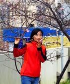 假日隨拍:新竹公園賞櫻美女