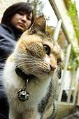 我的中時嚴選好圖:雙叟 老妹與貓