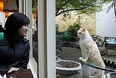 我的中時嚴選好圖:雙叟 老妹與貓2
