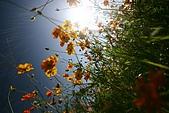 我的中時嚴選好圖:富里鄉農會的花
