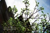 2013峇里島,懶洋洋自助行:52710024.jpg