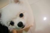 我的中時嚴選好圖:眼鏡行的狗