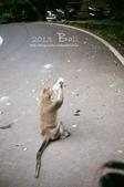 2013峇里島,懶洋洋自助行:52720008.jpg