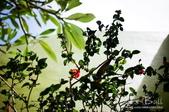 2013峇里島,懶洋洋自助行:52760011.jpg