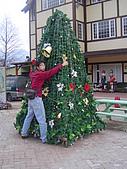 08.01.08五八車車又拋錨之綠光森林:好大一棵聖誕樹~