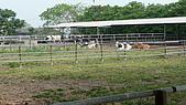 新化農改場:P1010101.JPG