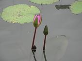民宿系列:薩爾斯堡含苞待放的蓮花