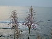 白沙灣:DSCF3796