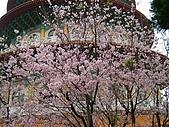 天元宮櫻花:DSCF1266