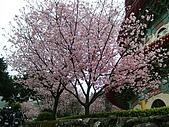 天元宮櫻花:DSCF1276