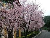 天元宮櫻花:DSCF1287