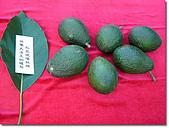 《多杰羌佛第三世》 :野生松鼠拜三世多杰羌佛學法,從樹上摘了六個酪梨做供養.