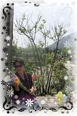 賞海芋:ap_F23_20110410081926896