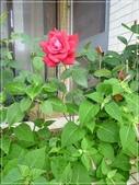 花花草草:嘉德麗亞蘭-1 005