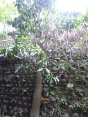 坡崁花草:砍樹 003