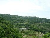 坪林旅遊:P1110502