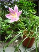 花花草草:庭園花草-3 059