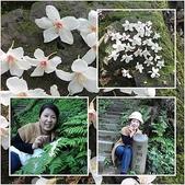 土城賞油桐花:page-4