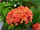 花花草草:庭園花草-3 065