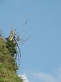 天梯、福盛山休閒農場二日遊:DSC00186.JPG