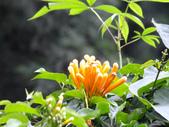泰雅渡假村:DSCF8810.JPG