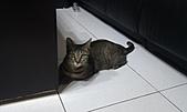 寵物:IMAG0076.jpg