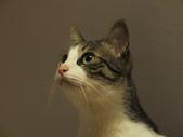 寵物:DSCF0083.JPG
