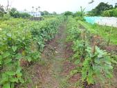 鹿野永安社區&日卡地自然農莊:DSCF4528.JPG