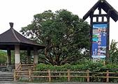 池上新興堤防:2020-05-27 17.24.28.jpg