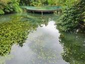 馬太鞍濕地生態園區:2020-05-27 11.47.34.jpg