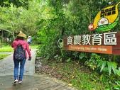 馬太鞍濕地生態園區:2020-05-27 11.58.05.jpg