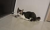 寵物:IMAG0048.jpg