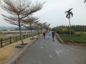 林內九芎村落羽松:DSCF5808.JPG