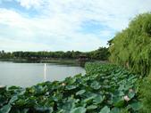 新營天鵝湖&小半天:DSC02228.JPG