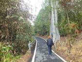 澀水森林步道:DSCF8184.JPG