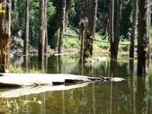 忘憂森林及小半天:DSC02449.JPG