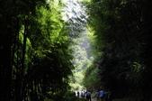 忘憂森林及小半天:DSC_1244.JPG