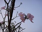 2009橋頭老家:DSC05174.JPG
