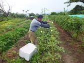 鹿野永安社區&日卡地自然農莊:DSCF4529.JPG