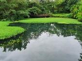 馬太鞍濕地生態園區:2020-05-27 11.42.21.jpg