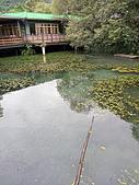 馬太鞍濕地生態園區:2020-05-27 11.49.55.jpg